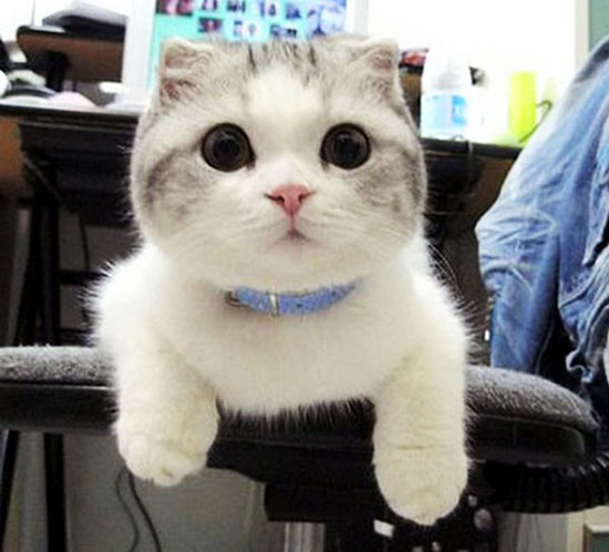 گربه های زیبا و ملوس و دوست داشتنی + عکس - مهین فال
