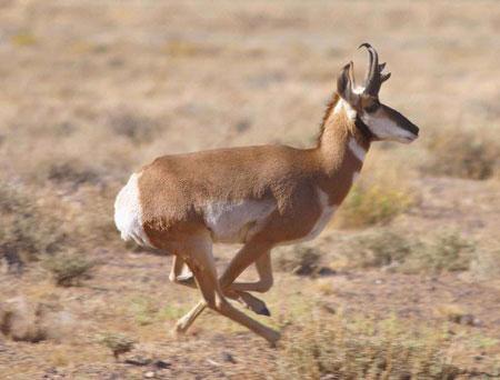 سریعترین جانوران روی زمین+عکس