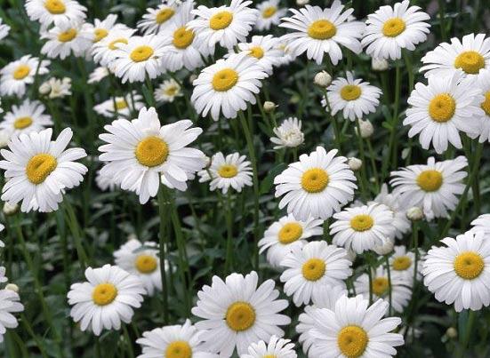 با این گیاه به راحتی سینوزیت را درمان کنید
