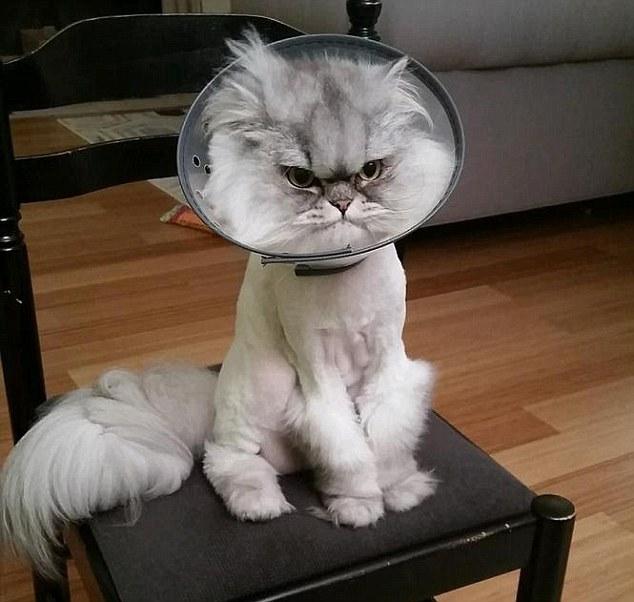 میلیون ها لایک برای این گربه عصبانی + تصاویر