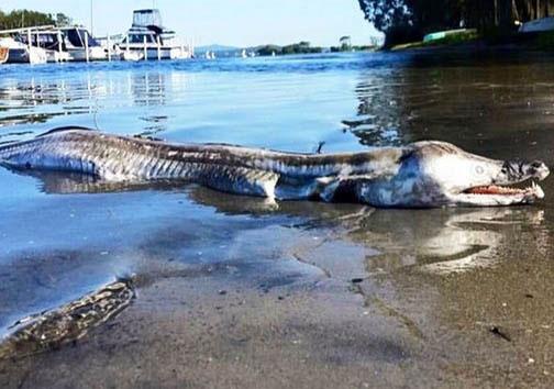 موجود ناشناخته در سواحل استرالیا+عکس