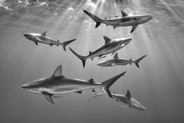 تصاویر شگفت انگیز از اعماق دریا