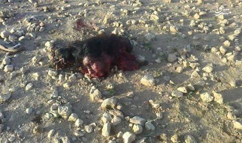 تصاویری از سر جداشده زن انتحاری داعش در سوریه