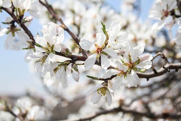 نکات مهم طب سنتی در فصل بهار