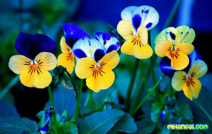 معجزه گل ها