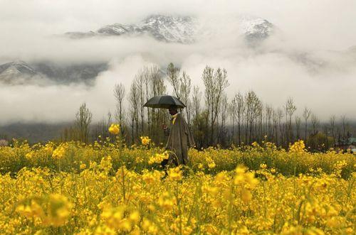 طبیعت بهاری سرینگر کشمیر
