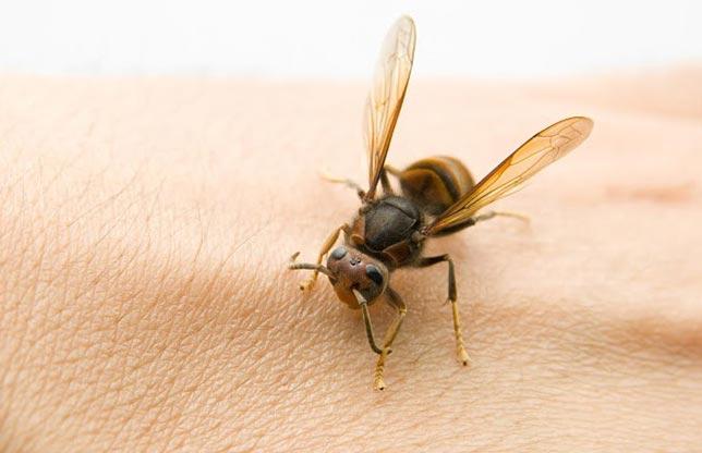 توصیه های خانگی در مورد نیش زنبور