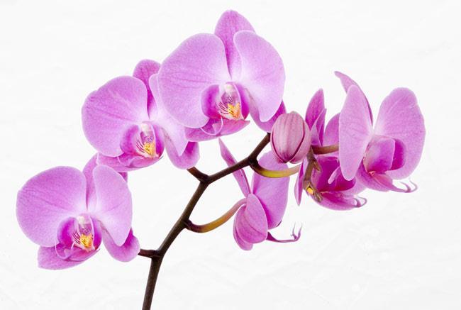 روش نگهداری گل ارکیده