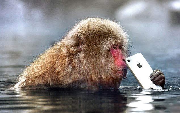 میمونی که گوشی آیفون را دزدید + تصاویر