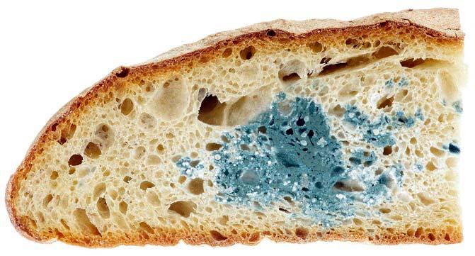 آیا تمام نان کپک زده را باید دور بریزیم؟