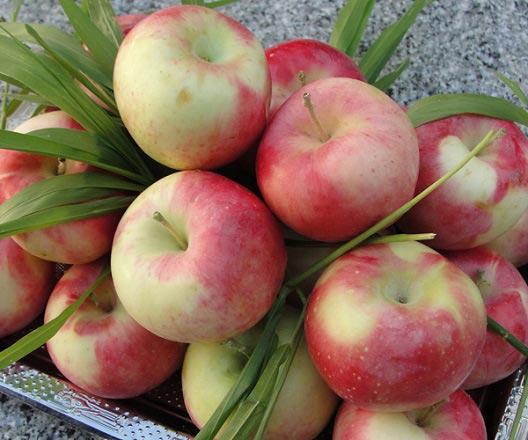 برای پیشگیری از پوکی استخوان این میوه را بخورید