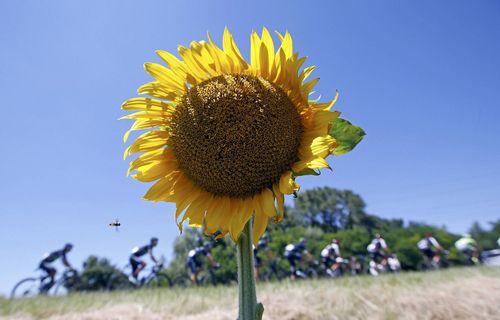 مسابقات دوچرخه سواری تور دو فرانس