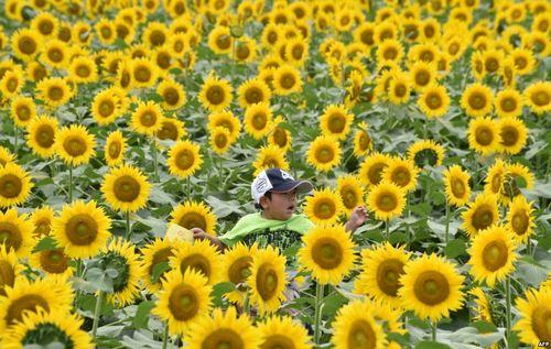 بچه ای سوار بر دوش پدر در حال بازدید از یک نمایشگاه گل و گیاه در ژاپن