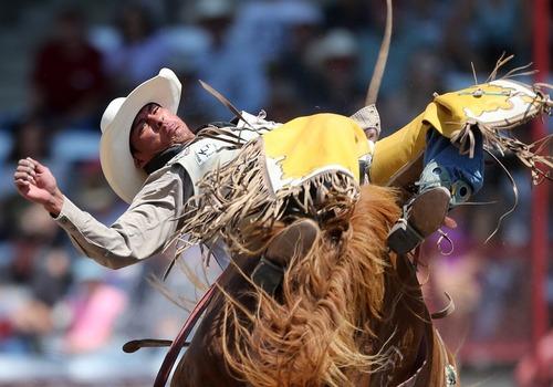 مسابقات سواری گرفتن از اسب وحشی – آمریکا