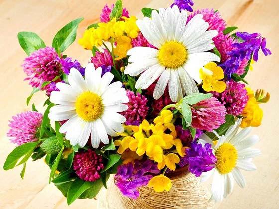روش نگهداری از گل طبیعی