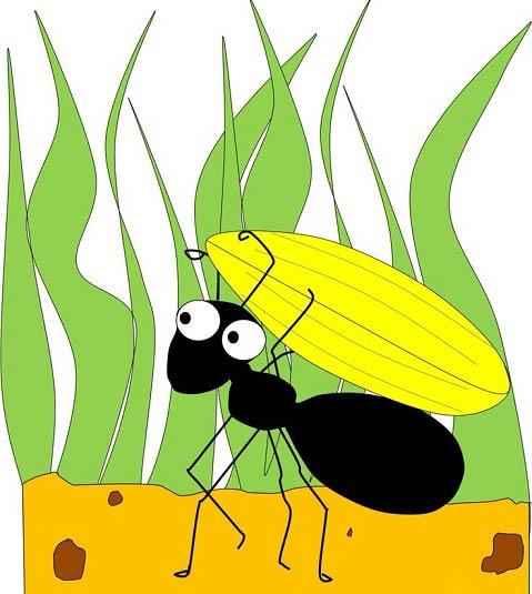 داستانک زیبای حضرت سلیمان و مورچه