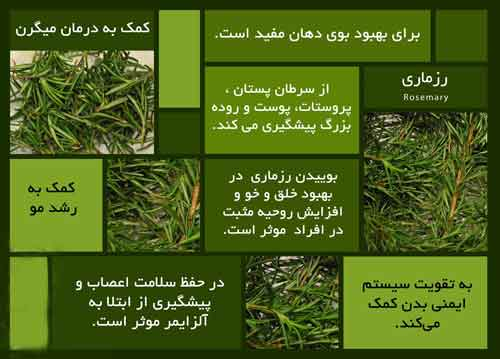 گیاه تقویت کننده  سیستم ایمنی بدن در برابر عوامل سرطانی