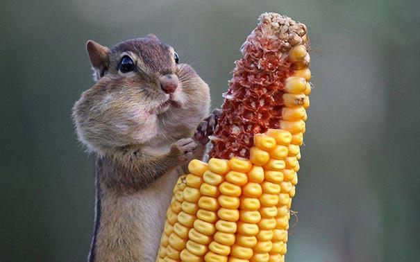 تصاویر جالب غذا خوردن حیوانات از نمای نزدیک