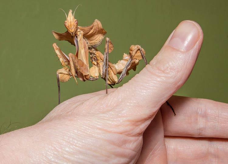 تصاویری از عجیب ترین حشرات جهان