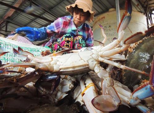 بازار ماهی در جیانگسو چین