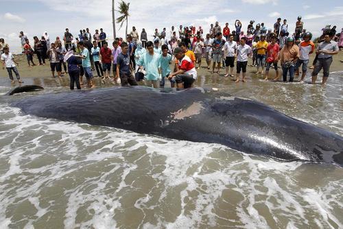 وال مرده در سواحل آچه اندونزی