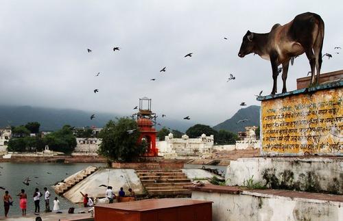 شهر پوشکار در راجستان هند