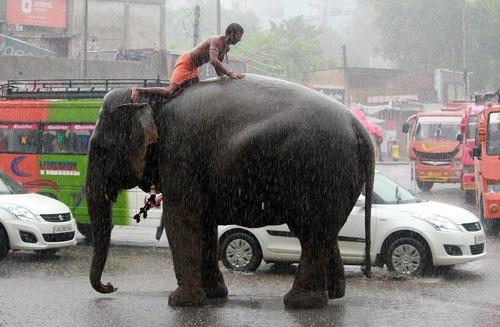 فیل سواری در هوای بارانی جامو – پایتخت کشمیر