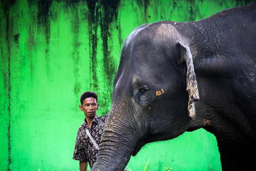 باغ وحشی در سوماترا اندونزی