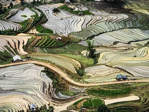 شالیزار – ویتنام