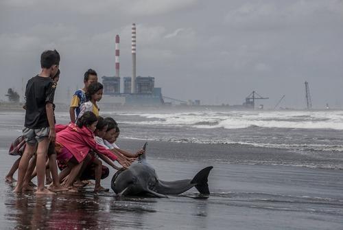 یک دلفین زخمی در ساحل جاوه اندونزی