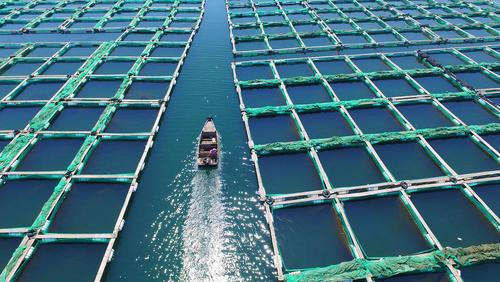 مزرعه پرورش ماهی – چین