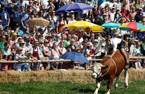 مسابقات سنتی گاورانی در باواریا آلمان