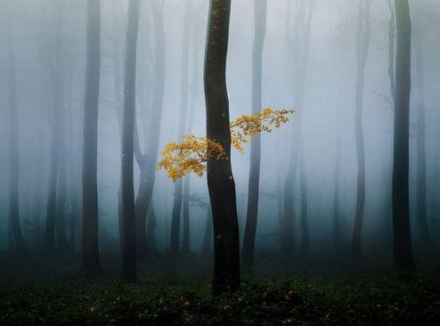 آغاز طبیعت پاییزه در جنگلی در بلغارستان