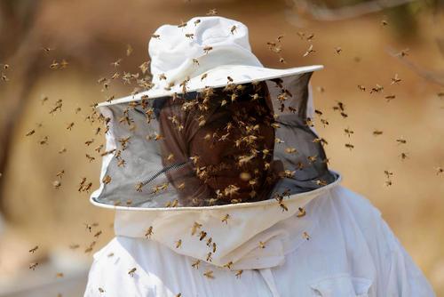 زن زنبوردار فلسطینی – کرانه باختری