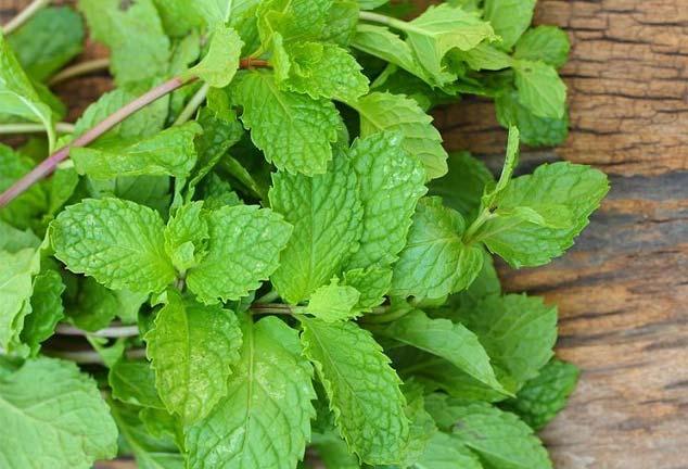 برای رفع خستگی این گیاه را بخورید!