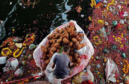 جمع آوری نارگیل های اهدا شده به خدای گانش پس از یک آیین مذهبی از رودخانه – احمد آباد هند