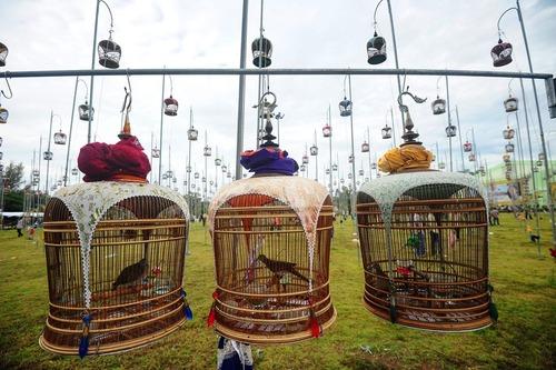 جشنواره آواز خوانی پرندگان – تایلند