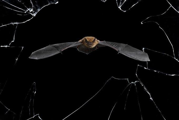 تصاویری شگفت انگیز از حیات وحش