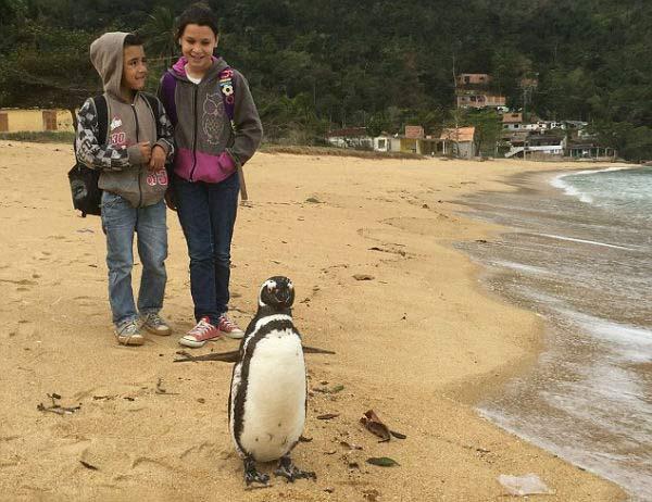 پنگوئنی که هر سال 8 هزار کیلومتر شنا می کند تا پیرمرد مورد علاقه اش را ببیند! + تصاویر