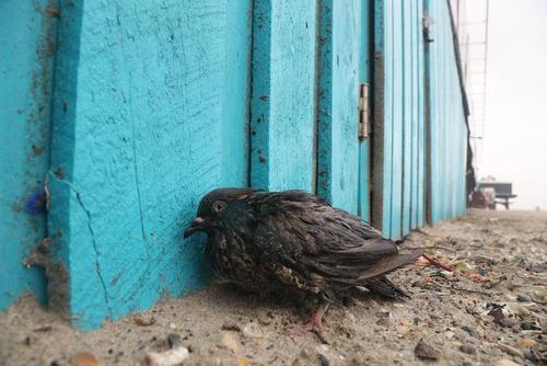 تصاویر دیدنی شنبه 17 مهر