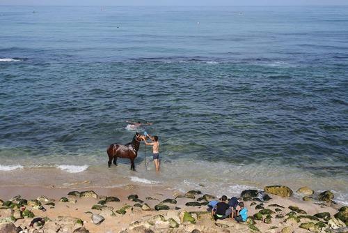 شستشوی اسب در ساحل غزه