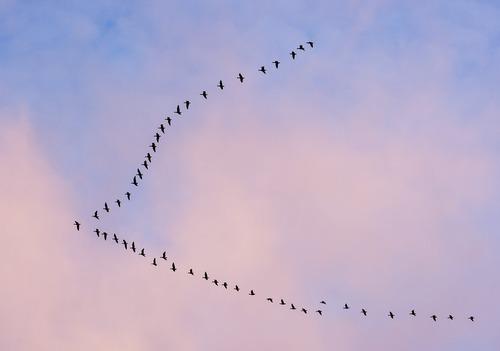 پرواز پرندگان بر فراز شهر