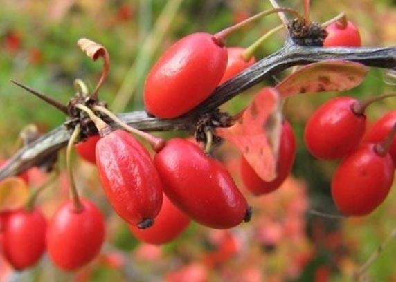 پیشگیری از سرماخوردگی با مصرف این میوه