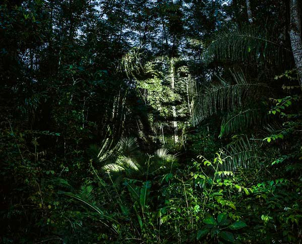 هنر خیابانی جهان در جنگل های آمازون + تصاویر