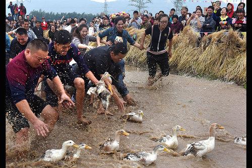 مسابقه گرفتن اردک در روستایی در چین