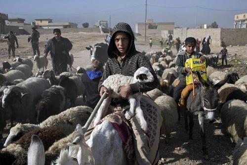 فرار شهروندان با احشامشان به نقاط امن از روستاهای اطراف موصل عراق