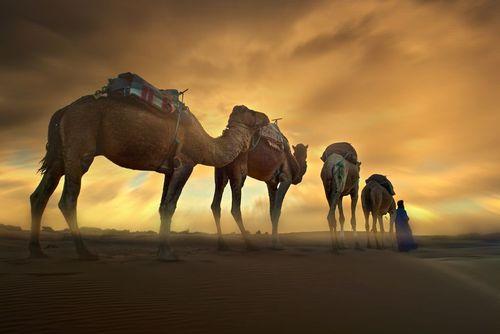 صحرایی در جنوب مراکش