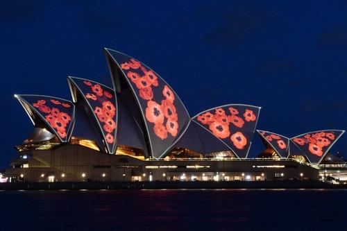 تزیین سالن اپرای شهر سیدنی استرالیابا طرح گل شقایق در روز گرامی داشت قربانیان جنگ اول جهانی