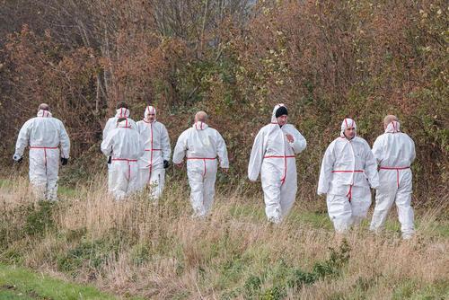 معدوم کردن 30 هزار مرغ آلوده به ویروس آنفلوآنزا در آلمان