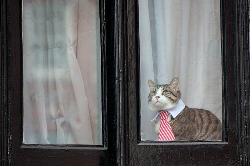 و گربه جولیان آسانژ از پشت پنجره در حال تماشای تلاش های حامیان اوست